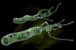 Бактерии - причина появления гастрита