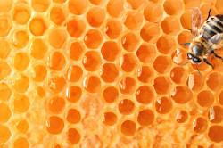 Пчелиный мед при хроническом гастрите