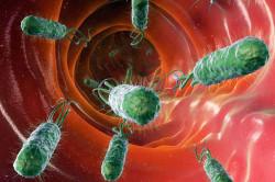 Бактерия Helicobacter pylori - возбудитель гастрита