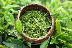 Зеленый чай при вздутии живота